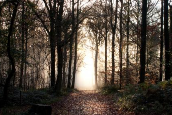First World War Commemorative Woodland Appeal Launches