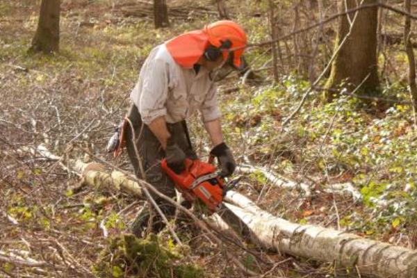 Autumn forestry work beginning this week