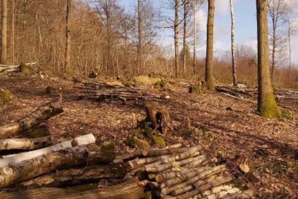 Woodland work at Queenswood this autumn and winter