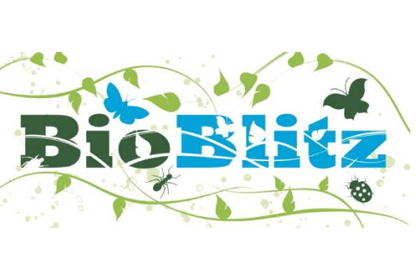 The Queenswood BioBlitz – a wildlife recording extravaganza!