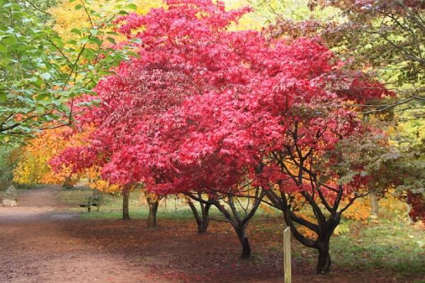Late Autumn Tree Trail