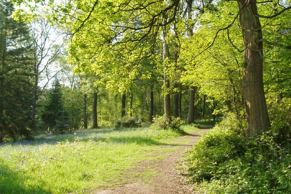 Summer Woodland - Trevor Hulme