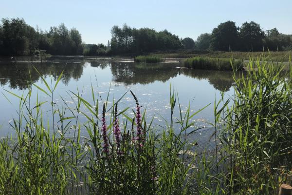 Bodenham Lake Summer 2020 - Credit: Sophie Cowling