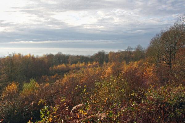 forest garden pic 2