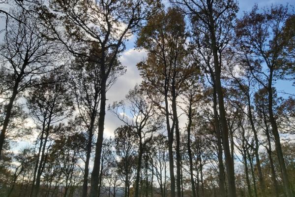 woodland management banner
